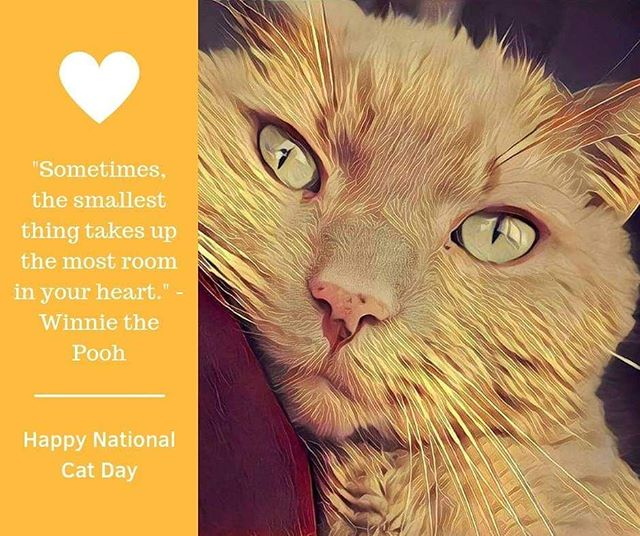 National Cat Day was founded in 2005 by Pet and Family Lifestyle Expert & Animal Welfare Advocate Colleen Paige to help raise the awareness of the number of cats that need to be rescued each year and also to encourage cat lovers to celebrate the cat(s) in their lives for the unconditional love and companionship they bestow upon us.